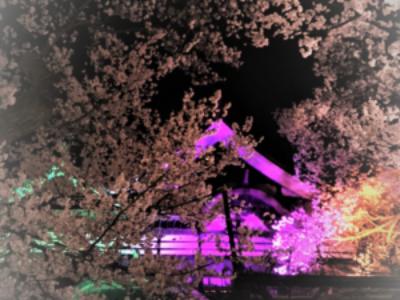 高遠城址公園 桜満開